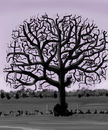 leafless-tree