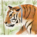 tiger-in-the-bamboo
