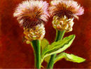 thistles-after-johnsin