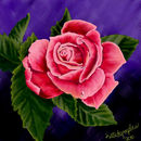 pink-rose